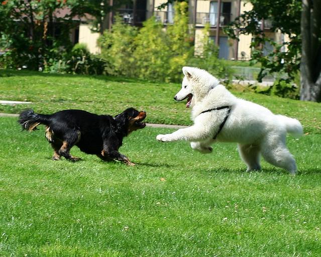 Dog Play 4