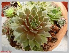 Stillleben Pflanzen