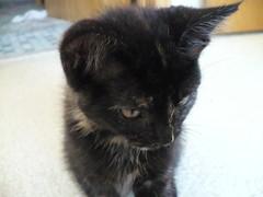Kittens 015