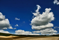Tractor at work. (algo) Tags: blue england sky tractor clouds forest photography interesting topf50 topv555 shadows searchthebest topv1111 chilterns topv999 explore fields algo topf100 senseofscale outstandingshots abigfave explore60 holidaysvacanzeurlaub 200750plusfaves goldenphotographer