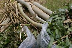 庭作業で出たゴミ