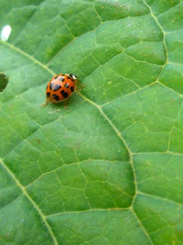 Exploring ladybug