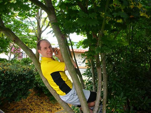 Mark Tree