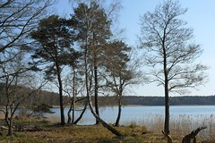 Trees at lake (ThomasKohler) Tags: lake tree nature see natur teich baum mv mecklenburg feisneck seenplatte feisnecksee