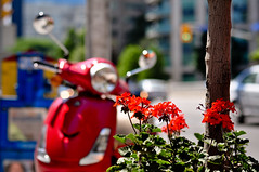 Vespa Love (mikehutch711) Tags: street city flowers red toronto love field 50mm vespa dof bokeh sidewalk stare 50 depth bloor 2010d90nikontoronto