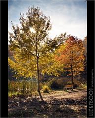 autumn backlight (luckybooj) Tags: autumn light lake sunshine canon bench lens colours body 2010 18mm kladno 40d luckybooj