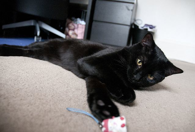 cute black cat playing with mousie