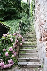 Scalinata (olaszvandor) Tags: flower scale stairs stair staircase scala fiori