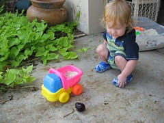 playing with the dump truck (brandnewday7) Tags: sandbox dex toydumptruck croclings