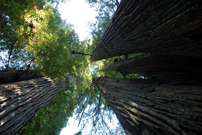 Looking up at treesDSC_4767