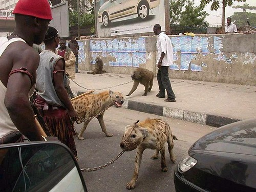 hyena-pets