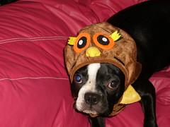 Rigby's Halloween Costume
