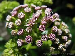 Planta / Plant