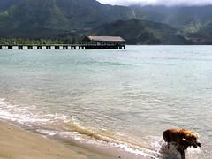 Hanalei Beach, Kaua'i (Frank Hamm) Tags: beach strand hawaii kauai hanalei