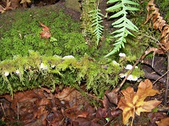 Little mushrooms in the moss