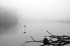 No Fishing (ICT_photo) Tags: morning mist lake fish ontario fog pond milton nofishing ictphoto ianthomasguelphontario