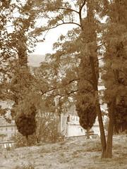 Nei pressi del castello (Weingarten) Tags: verona cypresses centrostorico veneto soave cipressi cyprs zypressen vrone venetien vntie
