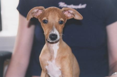 Wee Pup - August 2003