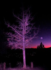 Moonglow at twilight, Bend, Oregon (moonjazz) Tags: moon tree night oregon dark twilight glow purple bend branches magic flash violet fantasy erie limbs moonglow