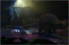 Tyrannosaurus VS Ankylosaurus