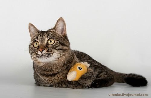 Всем поклонникам кота Пиндыка посвящается :) Pindo & Co (12)