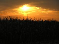 Summer Sunset on Corn Fields - Milaca, MN (Motty Chen) Tags: