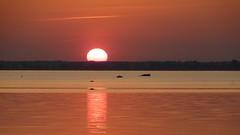 Sun design (Amiela40) Tags: sun art design soleil coucherdesoleil platinumheartaward photoquebec lemondemerveilleuxdelaphoto onlythebestofnature