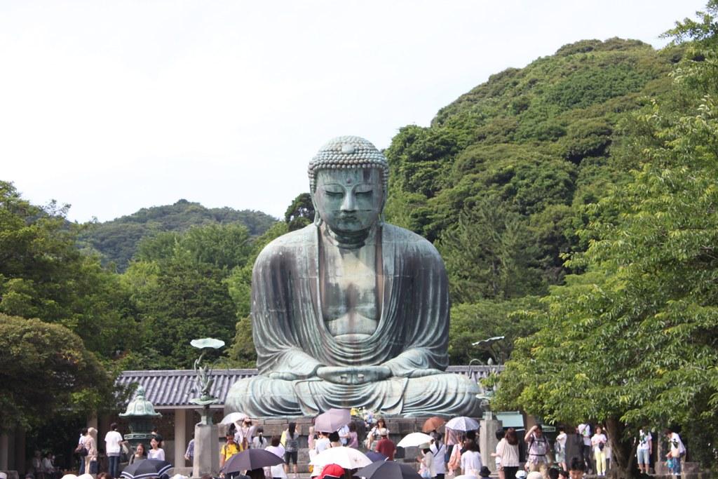 A Japan photo No.161:Hydrangea Walk(AJISAI) in Kamakura