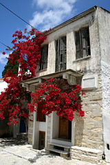 House in Halki on Naxos, Greece (May 2007) (Cor Lems) Tags: flowers white house flower canon island greek eos islands 300d may greece climbing naxos 2007 halki griekenland