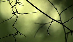 (Martha Catherine Ivey) Tags: morning moss bokeh dew twigs utata:color=black utata:project=upportfolio