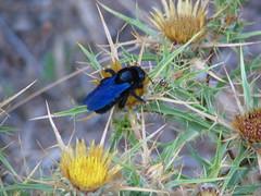 A beauty (marti2luna) Tags: vacation nature insect malilošinj Čikat