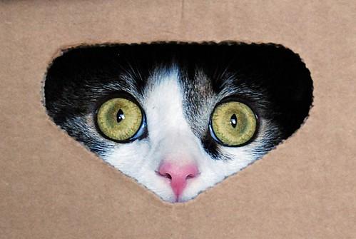 Gato mirando caja