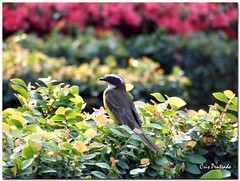 A verdadeira arte de viajar... (crispenteado) Tags: life green bird nature natureza jb specnature