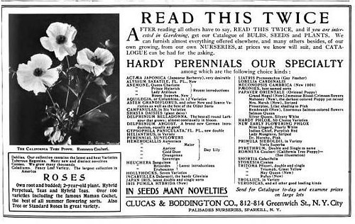 Matilija Poppy The Garden Magazine Jan 1906