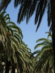 In una cornice di palme // In a palm frame (La minina) Tags: italy verde green riviera palmtrees frame palme cornice lookingupstairs guardandoinalto lungomaredivarazze strollinginvarazze gettyimagesitalyq1