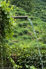 Water spout (Rob Huntley Photography - Ottawa, Ontario, Canada) Tags: china water pipe ivy hangzhou flowing spout teaplantation overflow huntley robhuntley overflowpipe robhuntleyphotography