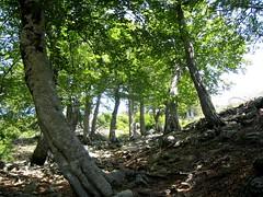 Dans la descente du GR20: à la source des bergeries de Pedinielli