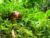 Mini - world (AniSuperNova83) Tags: naturaleza verde green mushroom leaves forest hojas colombia selva bosque jungle hongo duende pereira fantasía supernova83 lascabañas