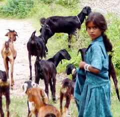 goat girl (joel suganth) Tags: blue people india love girl animal rural children photographer photos joel madras goat east childrens chennai tamil tamilnadu blueribbonwinner childrenofindia indiaimages glimpsesofindia aboutlooking indianphotographer tamilculture 50mill
