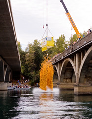 Splash Down (ronWLS) Tags: california yellow redding sacramentoriver duckyderby lakeredding abigfave