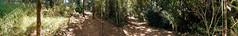 Trilha Panormica (elbragon) Tags: trees panorama nature bike bicycle bicycling cycling track cyclist natureza bicicleta panoramic adventure explore trail riding vegetation socarlos cerrado pan eco mato rvores 2010 aventura trilha vegetao samambaia panormica residencial singletrack ecologic ecolgica bragaresort elbragon
