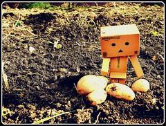 Danbo ramasse les patates du jardin (nevada38) Tags: japan garden toys amazon box jardin potato land terre carton tuin figurine garten picnik bonhomme patates kartoffel vynil aardappel danbo pommesdeterre amazoncojp revoltech danboard