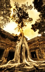 Swallowing the Ruins (Stuck in Customs) Tags: world tree art abandoned beautiful architecture dark temple photography photo scary ancient nikon ruins colorful cambodia pretty vishnu khmer dynamic buddha buddhist gorgeous religion tomb d2x ruin dream roots monk buddhism angkorwat eerie fresh professional laracroft lara croft photograph top100 portfolio fabulous siemreap angkor wat taprohm hindu technique takao buddist crypt tombraider juxtapose hdr trey confluence bayan taprom angkorvat portfolios ratcliff theravada quincunx suryavarman hdrphoto d2xs hdrtutorial stuckincustoms imagekind hdrphotos treyratcliff theravadabuddhist focuspocus2 portfoliodotcom portfoliosdotcom