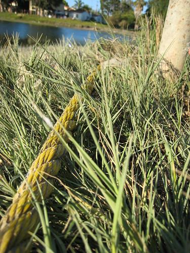 Salt grass_0720