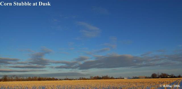 Corn Stubble at Dusk
