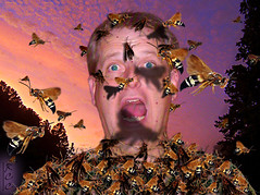 """""""This fit like clothes made out of wasps"""" (rcvernors) Tags: shadow portrait me danger photoshop altered insect flying scary wings funny wasp sting flash digitalart rick clothes scream computerart thumbsup yell antenna aw swarm allrightsreserved modestmouse cicadakillerwasp photoshopart inspiredbymusic rcvernors altereduniverse weweredeadbeforetheshipevensank partingofthesensory thisfitlikeclothesmadeoutofwasps"""