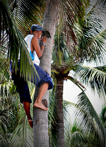Philippines Pinoy Filipino Pilipino Buhay Life people pictures photos life coconut climbing man, young, traditional
