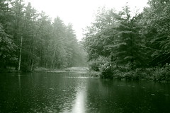 Rain on Crooked Spring, Chelmsford, MA (Doug Sparks) Tags: bw massachusetts greentone dougsparks