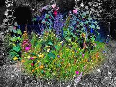 A Bees World (gatowlion) Tags: flowers colour photoshop bee hollyhocks