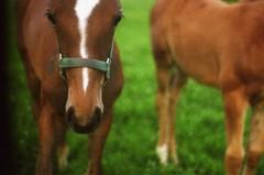 horse & horse